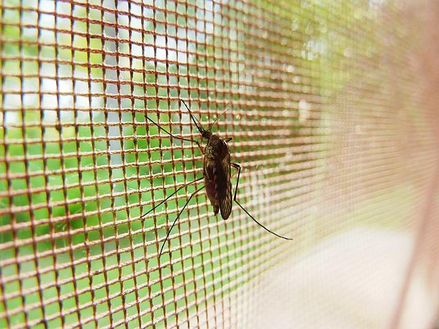 Giftige Mücken