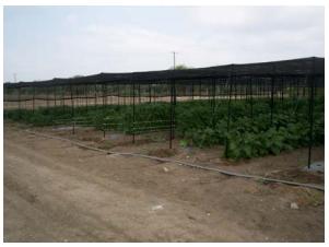 Protege tus cultivos con una casa sombra